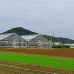 Bis nach Hamamatsu prägen Gewächshäuser das Landschaftsbild.