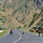Jeden Tag begegnen uns viele Dutzend Esel. Ein Rastplatz auf der Strasse ist völlig normal.