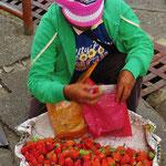 In Baguio gibt es frische Erdbeeren, da greifen wir sofort zu.