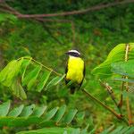Jeden Tag freuen wir uns an farbigen Vögeln. Fotografieren mit der Kompaktkamera schwierig.