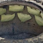 Sehr fein: Usbekische Teigtaschen mit Gemüse-Fleischfüllung.