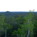 Als kleine Hügel schlummern noch nicht freigelegte Pyramiden unter dem weiten Urwalddach.