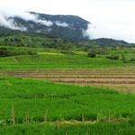 Terrassenförmig angelegte Reisfelder.