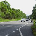 Das Fahren auf dem Pazifik Highway ist für uns eine Tortour.