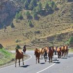 Für die Kirgisen sind Pferde wichtige Arbeitstiere.