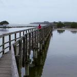 In Urunga führt ein langer Steg entlang des Mangrovensumpfes zum Meer.