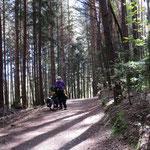 Radweg im Osttirol, für einmal auf Waldwegen
