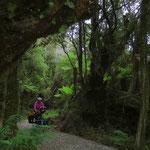 Der Wald hat etwas mystisch-wildes.