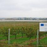 Die EU und ihre Geldtöpfe sind oft präsent. Hier hat sie eine grosse Obstplantage mitfinanziert.