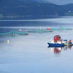 Fischzuchtbetriebe gibt es in Norwegen viele.