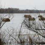 Felder mit Strohrollen - alles unter Wasser.