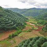 Kautschukplantagen bedecken hier fast alle Berghänge.