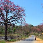 Die blühenden Bäume sind sagenhaft schön!