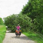 Auf dem Isarradweg versperren immer wieder umgestürzte Bäume den Weg.