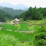 Bis in hinterste Talwinkel wird Reis angebaut.