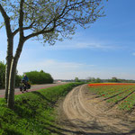 Pedalen entlang von Tulpenfeldern und Kanälen.