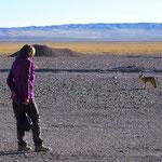 Ein Fuchs schleicht um die Aballdeponie an der Grenze . . .