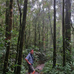 Meist sind wir allein unterwegs auf den Wegen des Kinabalu Nationalparks.
