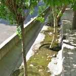 Das viele Grün in der Stadt muss regelmässig bewässert werden.