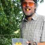 Wilde Pflaumenbäume - wir können den süssen Früchten nicht wiederstehen.