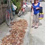 Kopra, das Fruchtfleisch der Kokosnuss, wir auf dem Trottoir getrocknet.