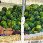 Melonen verkaufen macht soooo müüüde . . .