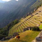 Für Perureisende ist Machu Piccu fast ein Muss.