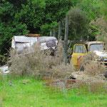 Wild zelten kann mit 200 Dollar gebüsst werden. Velassene Häuser und Autos, die vor sich hin rosten, sehen wir öfter.