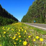 Rechts und links der Strasse grosse Eukalyptuswälder. Die Luft riecht gut!