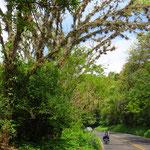 Wir tauchen innerhalb eines Tages hinter Xicotepec in dichten, grünen Urwald ein.