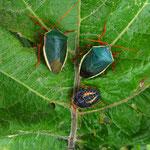 Keine Ahnung wie die Käfer heissen, aber schön sind sie auf jeden Fall!