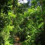 Guatemala ist vor allem viel, viel Natur.