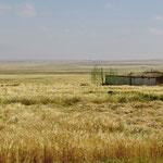 Bis auf über 3000 m ü.M. wird Weizen angebaut.