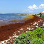 Strand an der Westküste von Cozumel. Die Algen sind ein grosses Problem.
