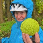 Frucht des Milchorangenbaums oder auch Osagedorn. Danke Bernhard aus Oberschwaben für die Mitteilung!