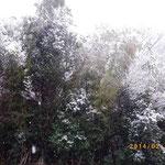 竹林も雪はらはら・・・・・・・・