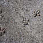 Spuren im Sand kann jeder. Aber wie sieht's hiermit aus?