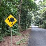 2017.6.15 Daintree 熱帯雨林