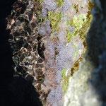 Alghe tra gli scogli