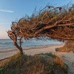 Il Golfo: località Mortelliccio/Perelli