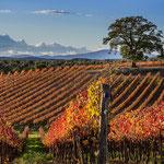Massa M.ma (Gr): viti in autunno