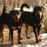 Quinta und Quinto (Heidi und Toni)