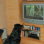 Pira sieht fern - am liebsten Krimis und Tiersendungen