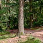 In het bos (Fuji XT-1)