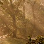 Licht (Canon 5DMKII)