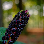 Bokeh fruits