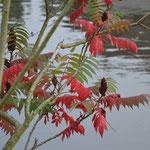 Herbstfarben am Wasser