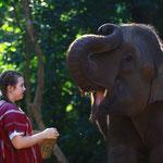 Thailand, Elefanten in Chiang Mai