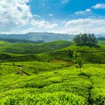 Berge um Ooty - Indien