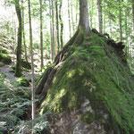 Unglaublich dieser Standort für einen Baum